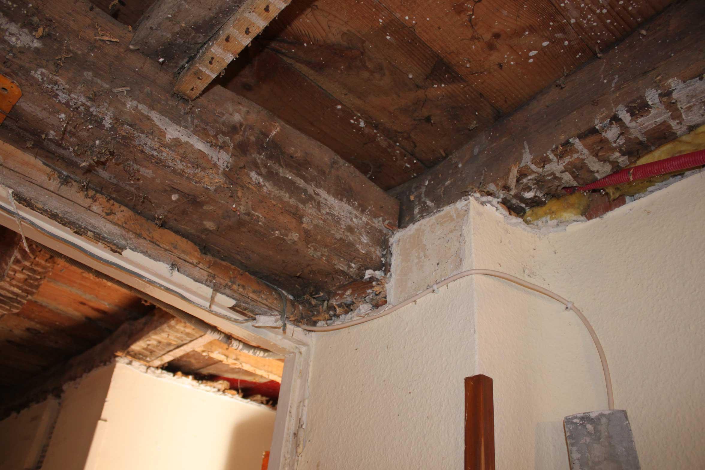 Trabajos Rvive - Informe de estructura de madera en Irun
